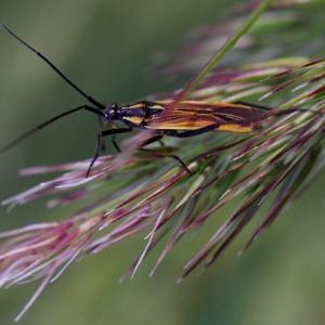Divný hmyzák, nějaká ploštice asi.