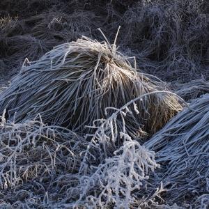 Zmrzlá tráva.