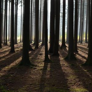 Ráno v lese.