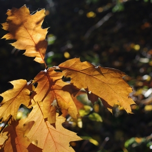 Podzimní v lese.