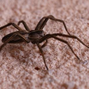 Pavouk na fasádě.