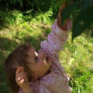 Ester trhá třešně.