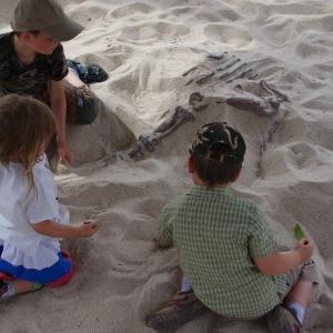 Haranti vyhrabávají dinosaura z písku.