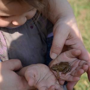 Žabička v dlaních.