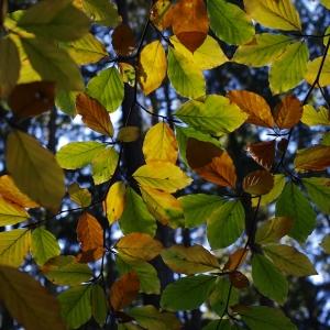 Podzimní tapeta.