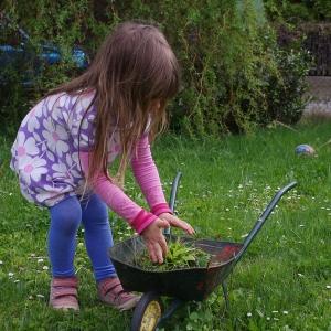 Esterka zahradnice.