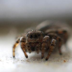 Roztomilý pavouček.