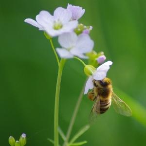 Včelka na květu.