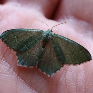 Motýlek.