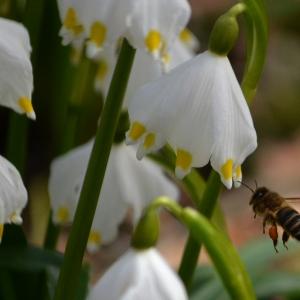 Včelka v bledulích.